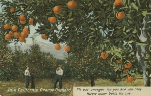 Orange grove (Source)
