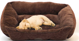 Comfy Dog knows how to get comfy