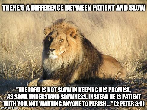 Lion - patience