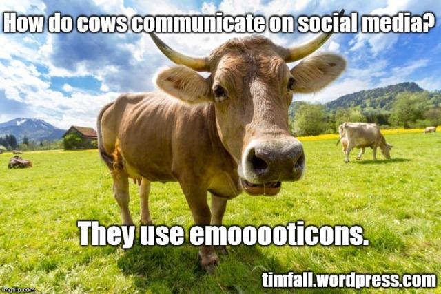 bovine-humor